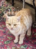 Pictures of cat looking in different directions, cat waiting for prey, cat eyes,.  stock image