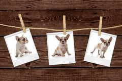 Pictures Hanging on a Rope of an Adorable Puppy Royalty Free Stock Photos