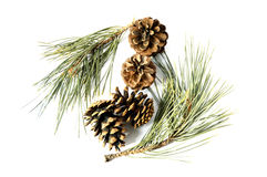 Pictures of pine cones used as ornaments at home Stock Photos