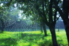 Pictures of spider webs in the spring, during the morning, green blue color, silence and peace Stock Photography