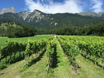 Maienfeld Graubuenden Switzerland vineyards Summer. This pictures was taken on the wine trail between Maienfeld and Flaesch in the Graubünden, Switzerland Stock Photos