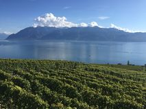 Fall light, Lavaux, UNESCO, vineyards. This pictures was taken on the wine trail near Epesses in the Lavaux vineyards, Switzerland Royalty Free Stock Photography