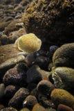 Under Water Life Stock Photos