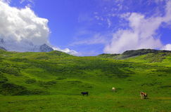 Picturesque Alpine landscape Stock Photos
