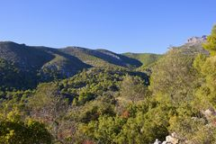Mountain forests of Andalusia in Southern Spain Royalty Free Stock Image