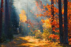 Picturesque autumn forest royalty free stock photography