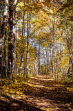 Picturesque autumn forest illuminated by the morning sun Royalty Free Stock Photos