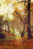 Picturesque autumn forest scenery with rays of soft light. Stock Image