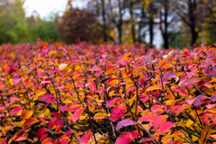 Picturesque autumn hedgerow Stock Image