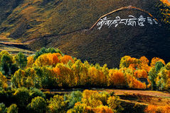 Picturesque autumn landscape in Tibet Stock Images