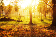 Picturesque autumn park background. Bright yellow and orange tre Royalty Free Stock Image