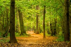 Picturesque autumn park in Russia. In October stock photography
