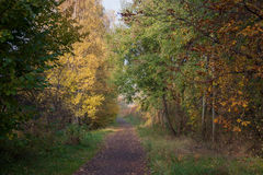 The picturesque autumn path. A scenic walk among the autumn trees full of colors Stock Photography