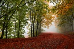 Picturesque autumn path. Vibrant colors of autumn have paint this picturesque forest scenery stock photos
