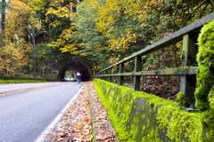 Picturesque autumn road with tunnel in yellowed forest Stock Images