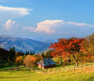 Picturesque autumn rural landscape with a tree with red leaves, Stock Photo