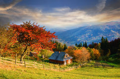 Picturesque autumn rural landscape with a tree with red leaves o Stock Images