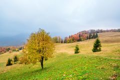 Picturesque autumn scenery in the mountains with meadow and colorful trees on foreground and fog above valley. II Royalty Free Stock Photo