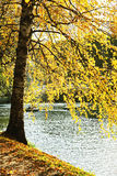 Picturesque autumn tree . Royalty Free Stock Photos