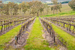 Wine valley in Adelaide Hills. Picturesque autumn wine valley in Adelaide Hills region, South Australia royalty free stock photos