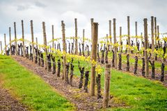 Wine valley in Adelaide Hills. Picturesque autumn wine valley in Adelaide Hills region, South Australia royalty free stock photography