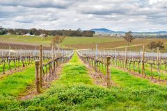 Wine valley in Adelaide Hills. Picturesque autumn wine valley in Adelaide Hills region, South Australia royalty free stock image