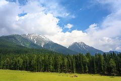 Picturesque Baisaran. Sprawling meadows of picturesque Baisaran is a must visit in Pahalgam, Kashmir. It is also called `Mini Switzerland` by the locals Royalty Free Stock Photography