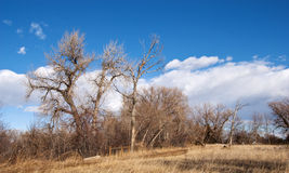 Picturesque Bare Trees Against a Bright Blue Sky Stock Image