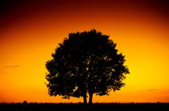 Picturesque big tree silhouette over sunset, single tree on the Stock Photos