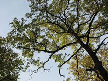 Picturesque branchy tree Stock Images