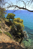 Picturesque coast of the Aegean Sea. Summer landscape. Royalty Free Stock Photos