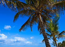 Picturesque coast Diani Royalty Free Stock Photography