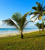 Picturesque coast Diani Stock Photography