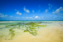 Picturesque coast Diani Royalty Free Stock Images