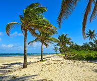 Picturesque coast Diani Stock Image