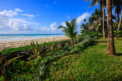 Picturesque coast Diani Stock Photos