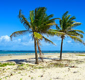 Picturesque coast Diani Royalty Free Stock Image