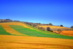 Picturesque colorful fields Stock Image