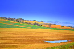 Picturesque colorful fields Stock Photo