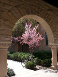 A picturesque corner at Stanford. University campus with the famous columns and vault, a bicycle and blooming tree Stock Images