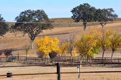 Autumn in Paso Robles, California - oak trees, vineyards and fall colors. Picturesque country side on the Central Coast of California in San Luis Obispo county Royalty Free Stock Photography