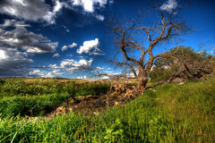 Picturesque countryside Stock Images