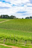 Picturesque countryside landscape of green vineyard hills. Nature background. Picturesque countryside landscape of green vineyard, winery hills. Nature Stock Photos