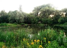Picturesque cozy corner. Warm summer evening. Pleasant freshness of a forest pond Stock Photos