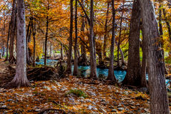 Picturesque Cypress Trees on the Guadalupe. Stock Photos