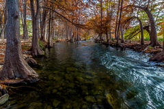 Picturesque Cypress Trees Lining the Guadalupe. Royalty Free Stock Photos