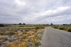 Picturesque deserted road through dunes towards the pacific ocean. Traveling along a neglected street among dunes in bloom, searching for the ocean in the cool stock image