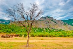 Picturesque dry tree at the foot of the mountain Demerdzhi. Stock Photo