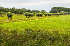 Picturesque Dutch landscape on a cloudy summer day Stock Image