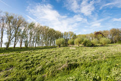 Picturesque Dutch rural landscape in spring Royalty Free Stock Image